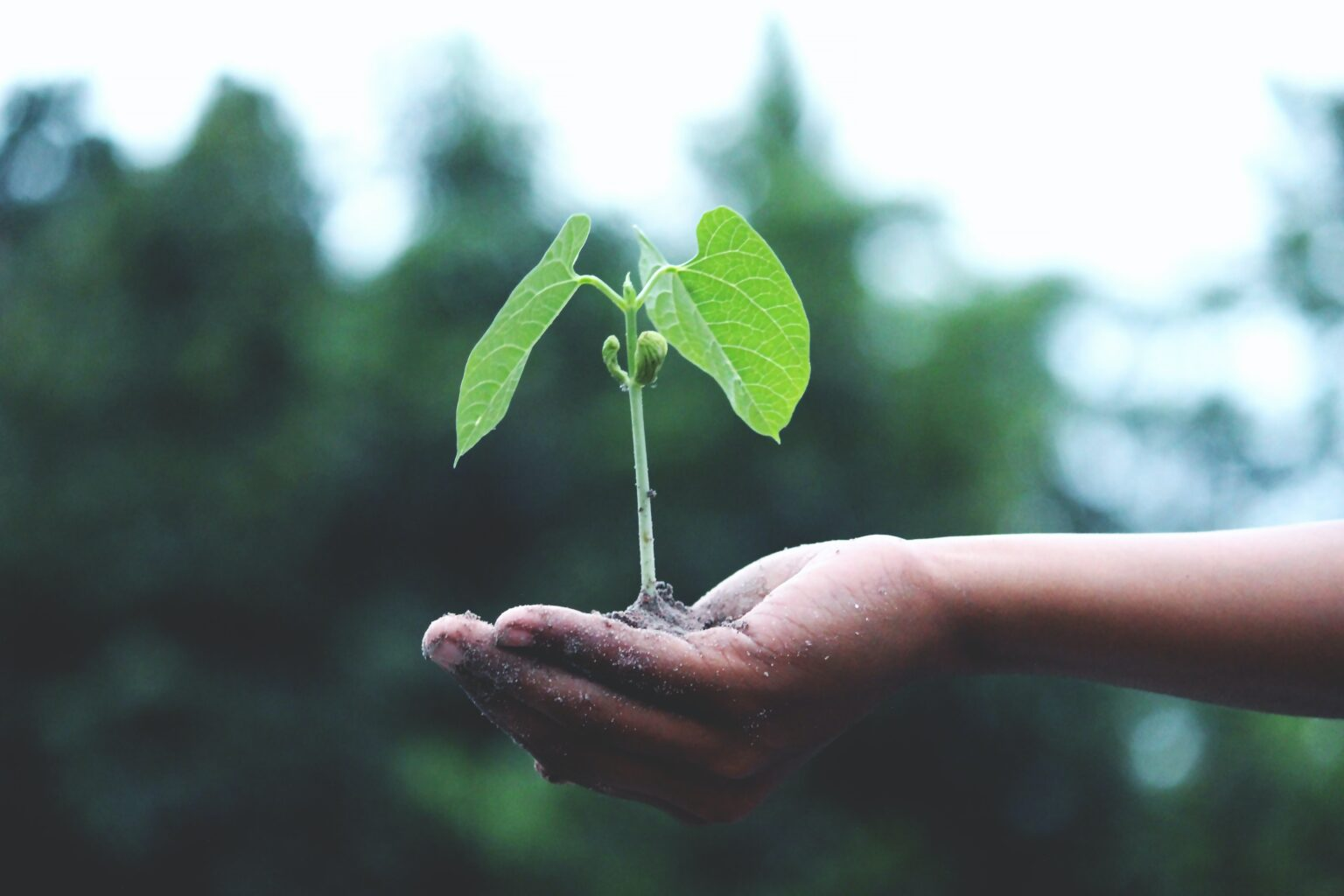 seedling plant boosted by turbo+