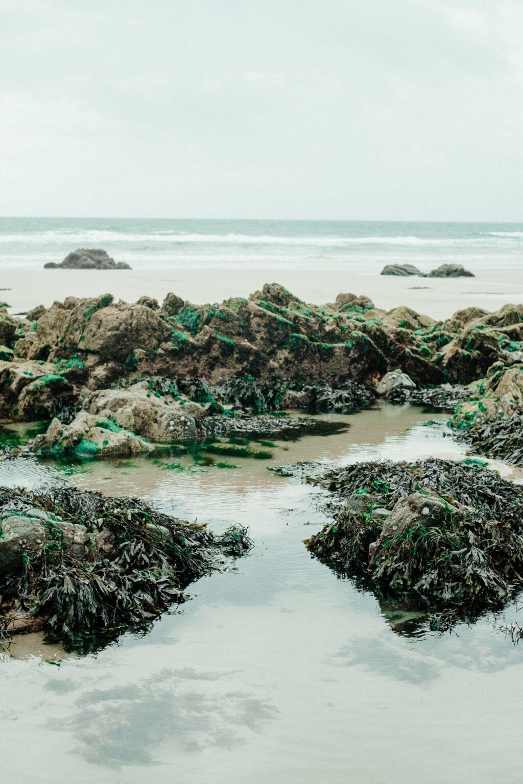 seaweed on rocks in sea amino acids